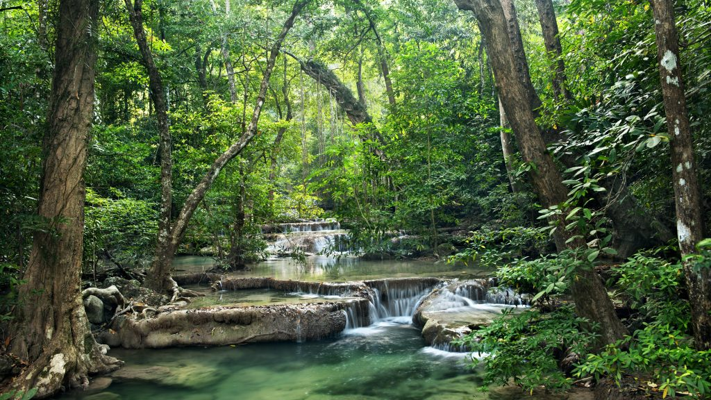 A river flows through a bountiful forest