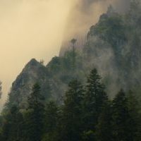 Silhouetted trees set against a misty mountain backdrop.