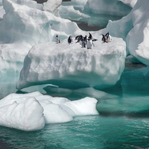 Penguins gathering on top of an iceberg